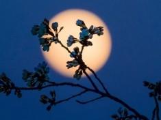 I poli della Luna sono 'vagabondi', mutato l'asse di rotazione