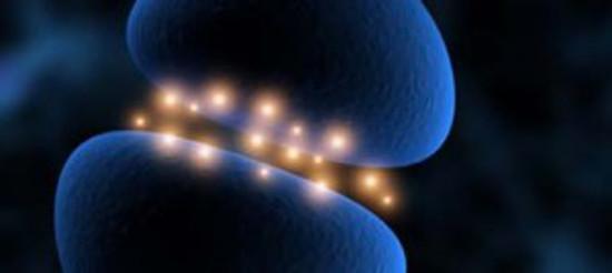 Il Cervello Quantistico e i Processi di Memoria