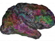 Una mappa cerebrale completa del sistema semantico