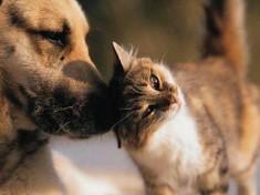 """""""Difendiamo cani e gatti dal fumo passivo"""": la campagna del Comune di Bologna"""