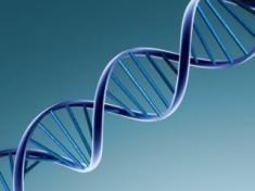 L'elettronica passa alle molecole di DNA