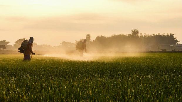 Per la prima volta calano gli OGM a livello globale