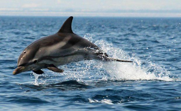 In Italia il primo rifugio in mare per delfini da curare