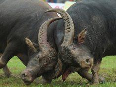 La dura lotta di Facebook contro le bufale