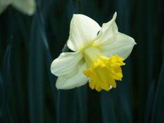 Il mito di Narciso e il suo significato psicologico