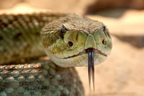 Sognare serpenti: cosa significa a livello simbolico