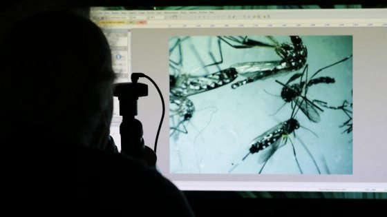 Zika, in Spagna nasce bimbo affetto da microcefalia virale: primo caso in Europa