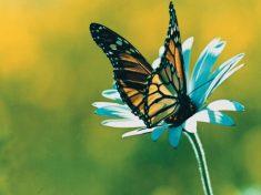 La Teoria del Caos: come l'effetto farfalla influenza la storia e il tempo atmosferico