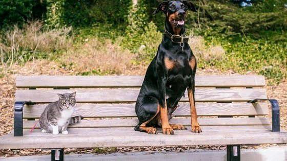 Cane o gatto? Ecco chi ha più amici su Facebook
