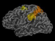 Come fa il cervello a capire le leggi della fisica