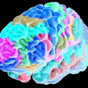 """Smog nel cervello, """"Così l'inquinamento contamina i neuroni"""""""