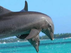''Una conversazione simile a quella umana'', l'incredibile linguaggio dei delfini