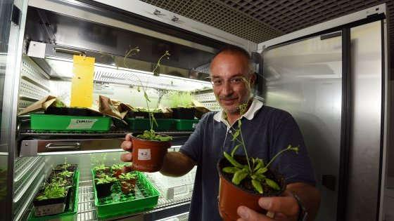 Stefano Mancuso nel suo studio al Polo scientifico universitario di Sesto Fiorentino