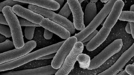 Nello spazio batteri soffrono la fame e usano kit emergenza