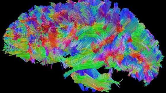"""Se la luce """"telecomanda"""" il cervello modificando i comportamenti"""