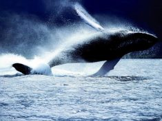 Nasce in Antartide l'area marina protetta più grande al mondo
