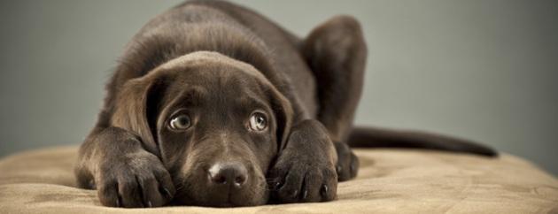 Come limitare i danni dei botti di capodanno sugli animali domestici