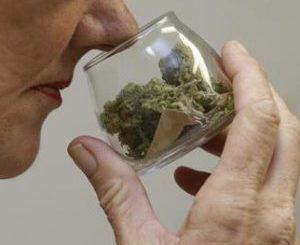 Non è la cura per tutto, la cannabis terapeutica è però utile per dolore e nausea