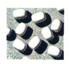 Borreliota variolae virus causa del vaiolo