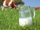 Non consigliate di bere il latte vaccino, fa perdere calcio nelle ossa