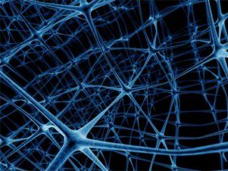 E' possibile manipolare i neuroni che segnano il passare del tempo