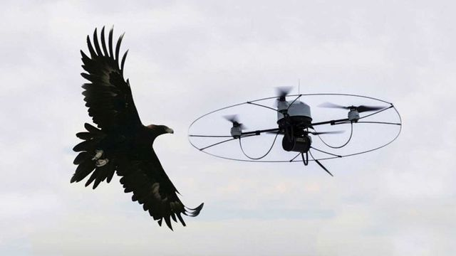 Nuove lenti per i droni, vista come le aquile