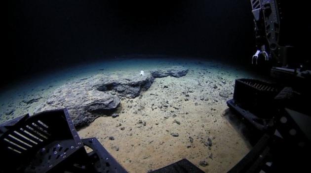 Un robot sul fondo della Fossa delle Marianne ha prelevato campioni di organismi e di suolo, entrambi contaminati dai PCB.