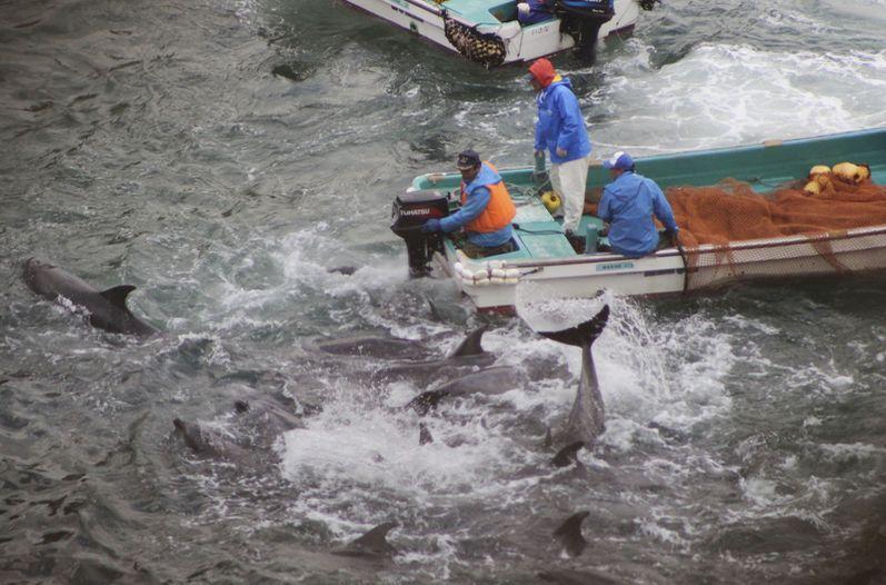 Aumentano i delfini nelle Eolie e creano problemi alla pesca
