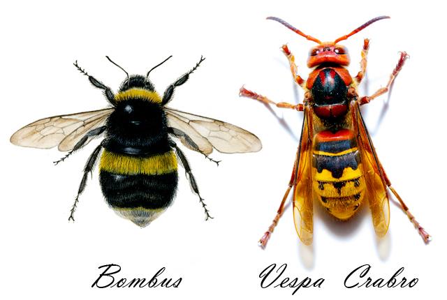 E se le api fossero intelligenti, capaci di apprendere?