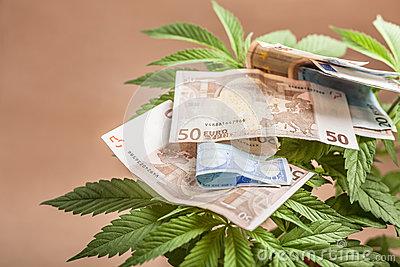 Investire in marijuana rende, risultato record per l'hedge fund