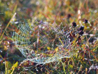 Nuova proteina per la bellezza dallo studio della tela di ragno