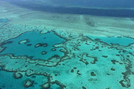 Sta morendo la barriera corallina australiana