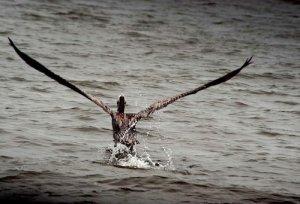 Ripulire i mari dal petrolio grazie a una spugna