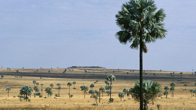 Le foreste nelle zone aride, tutte insieme, sono grandi quanto l'Amazzonia