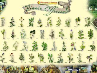 L'importanza di conoscere le piante medicinali, ve ne sono più di 28.000