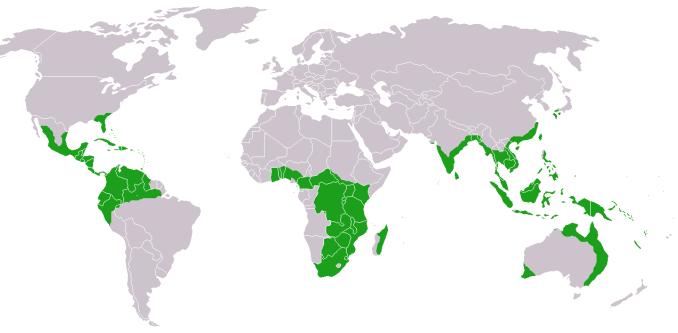 I paradisi tropicali a rischio sparizione causa riscaldamento globale