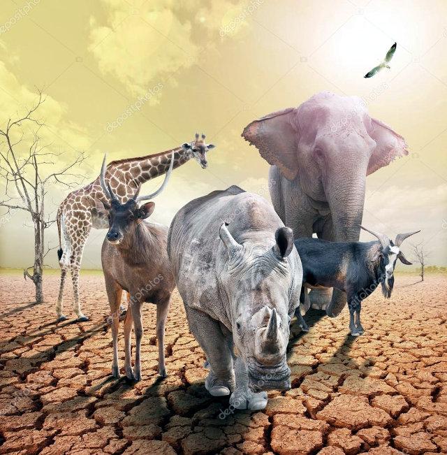 Defaunizzaione incontrollata, popolazione animale dimezzata