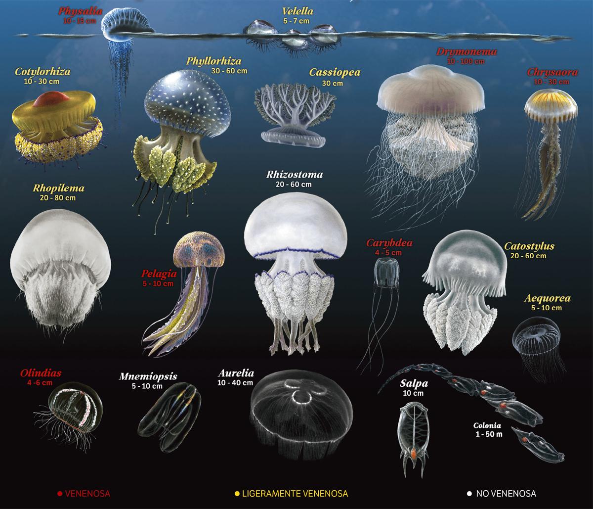 Un vacanza estiva in compagnia delle meduse