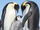 I pinguini imperatore di Pointe Géologie stanno perdendo il loro habitat naturale