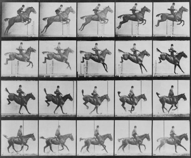 Una parte della sequenza fotografica di un cavallo in movimento acquisita da Eadweard Muybridge a fine '800 è stata scritta nel DNA di batteri viventi.|SHUTTERSTOCK
