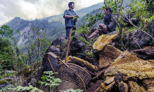 Allucinogeni naturali nel miele dell'Himalaya