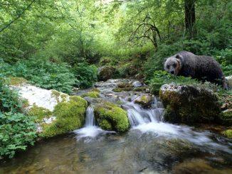 Fondi dal Governo per gli orsi del Parco Nazionale