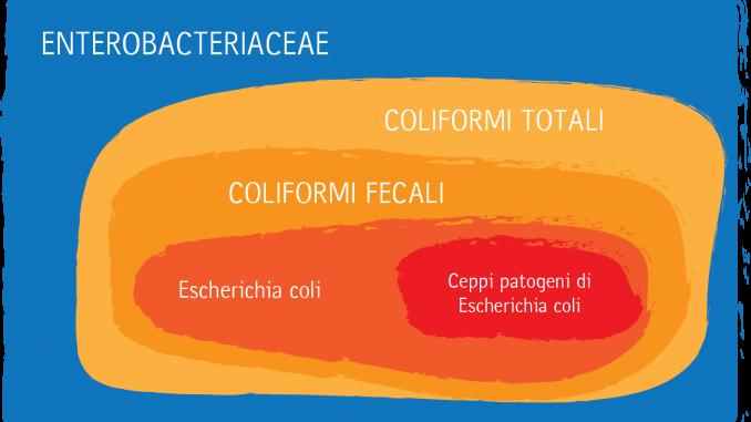 I nostri mari inquinati da enterococchi intestinali ed Escherichia coli