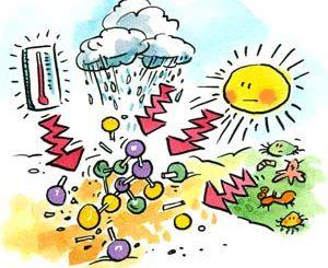 Nei polli e uova gli antiparassitari Fipronil e Methoprene