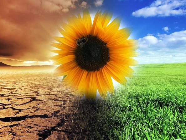 Il cambiamento climatico del riscaldamento mondiale in uno studio Finlandese