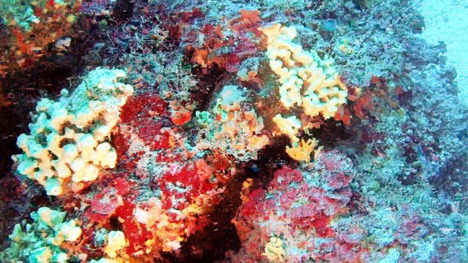 """Okeanos explorer, alla ricerca di """"alieni"""" nei fondali oceanici"""