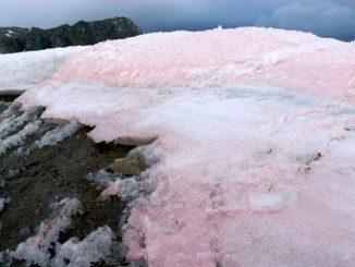 I ghiacciai dell'Artico si tingono di rosa