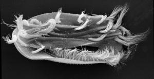evoluzione, vita sulla terra, evoluzione della vita, protozoi, batteri, caos, casualità, biologia