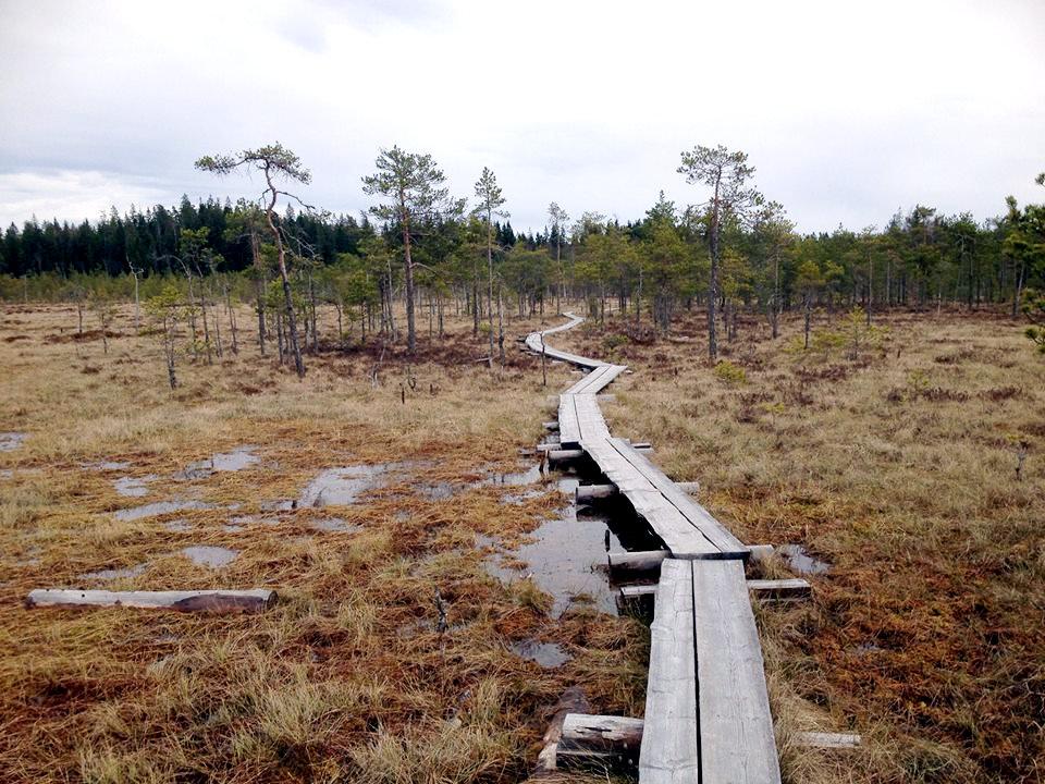 Allarme per la foresta boreale a causa dei fazzoletti usa e getta