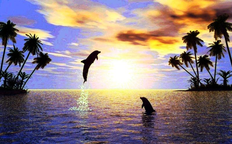 """Il cervello """"quasi"""" umano di balene e delfini li fa socializzare"""